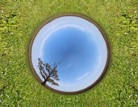 Stereographic panoramic projection of a green field with an tree. 360 degree panorama.