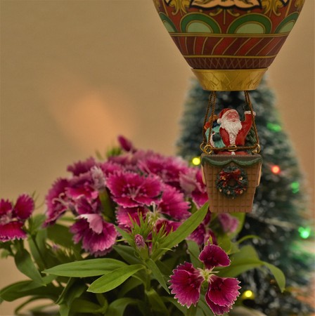 Santa Claus is arriving to town in a hot air balloon flying over flowers and christmas trees Banque d'images - 114126289