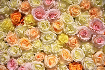 Hundres of roses as background Banque d'images - 120853334