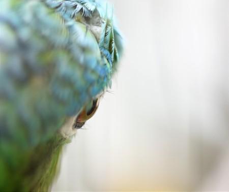 Portrait of close-up parrot eye Banque d'images - 120853411