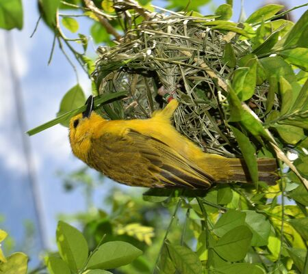 Golden Village Weaver is in process of creating a home