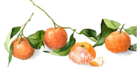 juicy: juicy mandarin, watercolor illustration