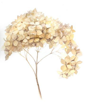 hojas secas: flores de otoño de la acuarela