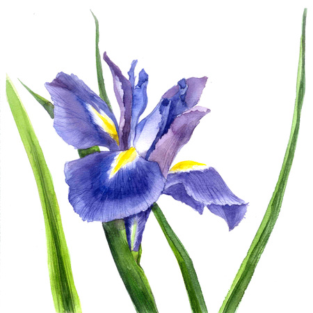 Shows for query translation watercolor iris, beautiful illustration, spring flowers watercolor Search instead for translation watercolor iris, beautiful illustration, spring flowers akvareyu watercolor iris, beautiful illustration, watercolor spring flowe Stock Photo