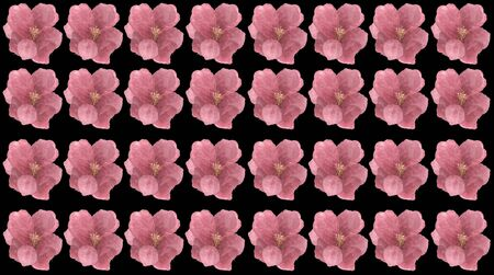 Floral Pattern Frame with Hydrangea in isolated black background - Flowers Decorative.