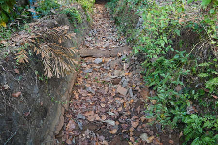Dry River or stream Path with Roots, plants and dry leaves in a forest during dry summer. Dry river bed with path and greenery. 免版税图像