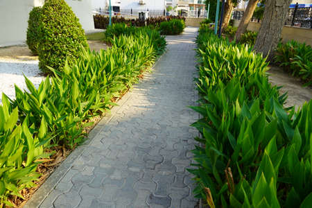 Dubai UAE December 2019 Scenic view of landscaped path with plants and stones in yard. Backyard of residential house. Stone pedestrian sidewalk going into the distance. Concrete pavement. Foto de archivo