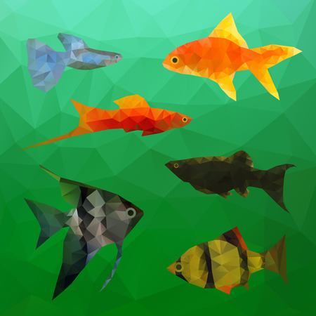 mahseer: Aquarium Fish in polygon vector style