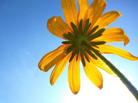 Вид снизу на цветке и небе
