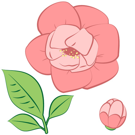 pink flower: Isolated pink flower