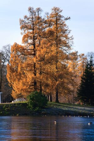 Autumns tree at park photo