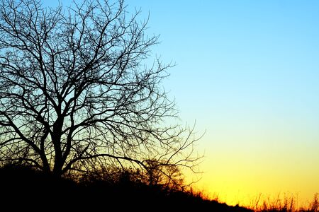 tree without leaves in the evening photo