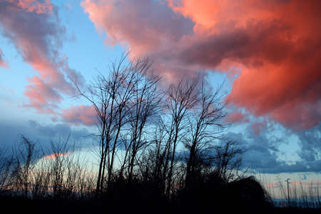 silhouettes of leafless trees at sunset photo
