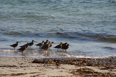 Birds walk on the beach water photo