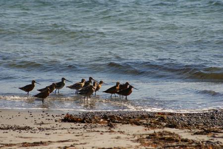 Birds walk on the beach water photo