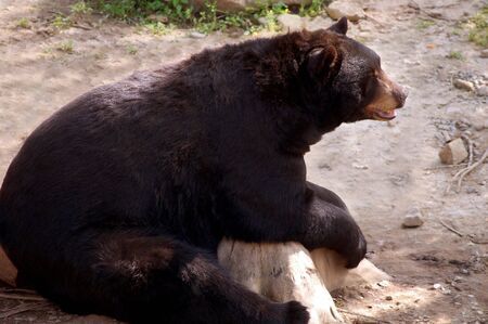 bear sitting on tree stump Фото со стока