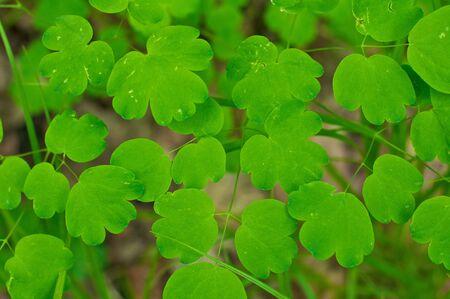 wild green plant in forest 版權商用圖片