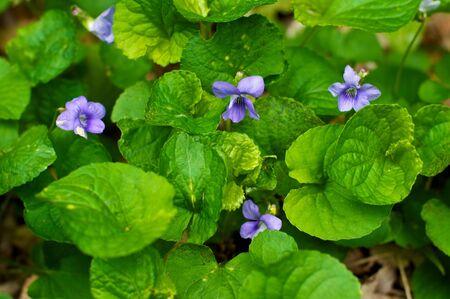 wild purple flower in forest