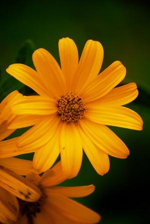 yellow flower Stok Fotoğraf