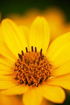 Fiore giallo Archivio Fotografico - 13567131
