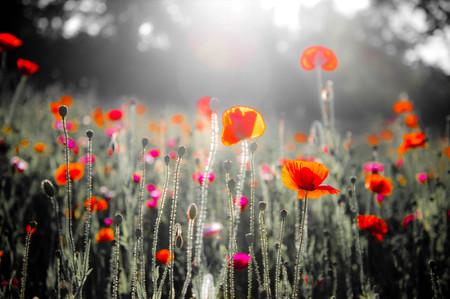 fiori di campo: fiori colorati