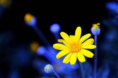 Yellow Flower Blue Background Stockfoto
