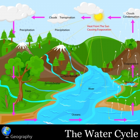 water cycle: Ciclo del Agua Vectores