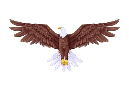 aguila volando: Flying Eagle