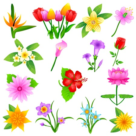 easy to edit vector illustration of colorful flower collection Vector