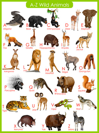 wild: easy to edit vector illustration of chart of A to Z wild animals