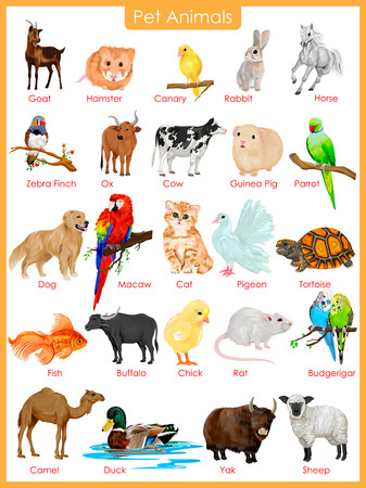 ox: easy to edit vector illustration of chart of pet animals