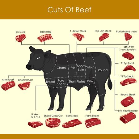 Ilustración vectorial de diferentes cortes de carne. Ilustración de vector