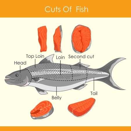 easy to edit vector illustration of different cuts of Fish  イラスト・ベクター素材