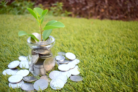 Investment, business and finance concept. Save money, invest and grow rich