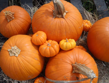 Pumpkins Imagens
