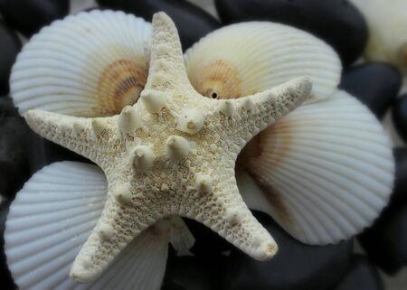 fish star: Close up Star Fish