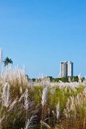 White grass and buildings in blue sky