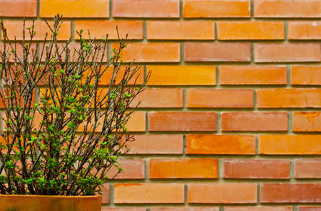 Brick wall surface with a tree pot photo