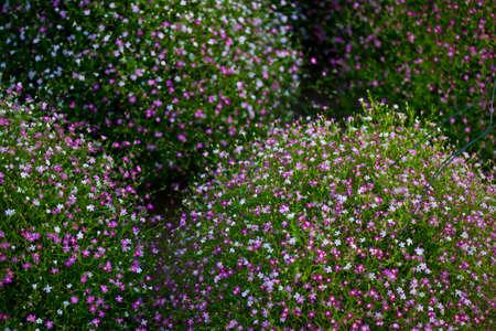 shrubs flower photo