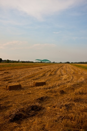 straw bales in countryside Stock Photo - 13292318