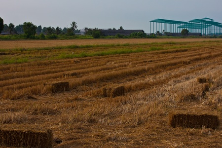 straw bales in countryside photo