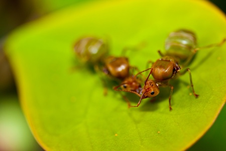 two ant on a leaf. photo