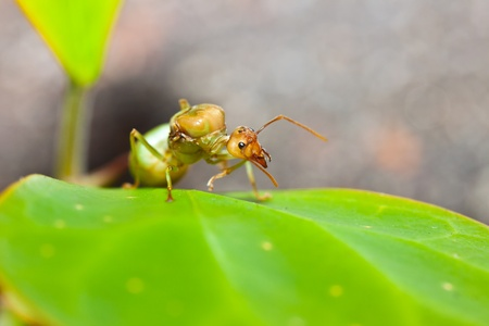 ant on a leaf. photo