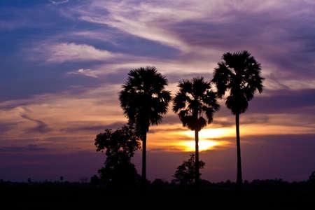sunup: trees sunset background