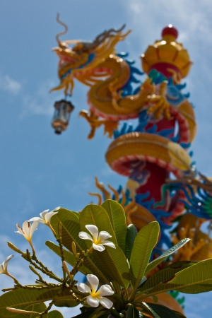 flower in dragon out off focus Stock Photo - 17997412