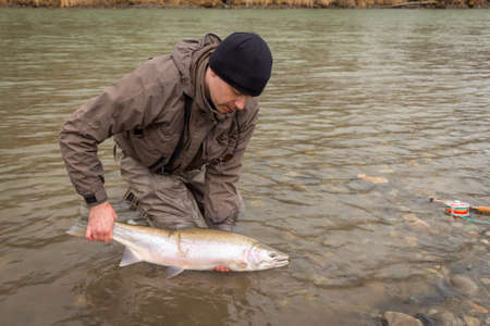 An angler releasing a steelhead, rainbow trout, back into the Kalum River, British Columbia, Canada.