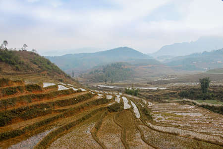 A close up of a Vietnamese rice terrace on a misty winters day, Sapa, Vietnam