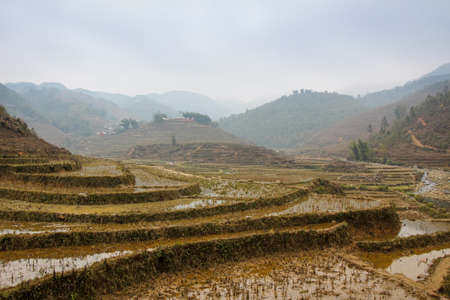 A vietnamese rice terrace on a misty winters morning in Sapa, Northern Vietnam