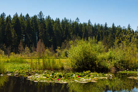 Beaver lake on a summers day in Stanley Park, Vancouver, British Columbia, Canada Banque d'images