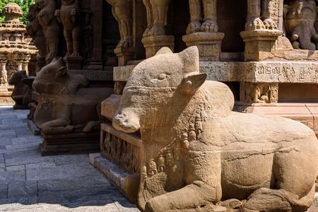 nandi: Nandi Bull in Shiva temple Tamil Nadu, India